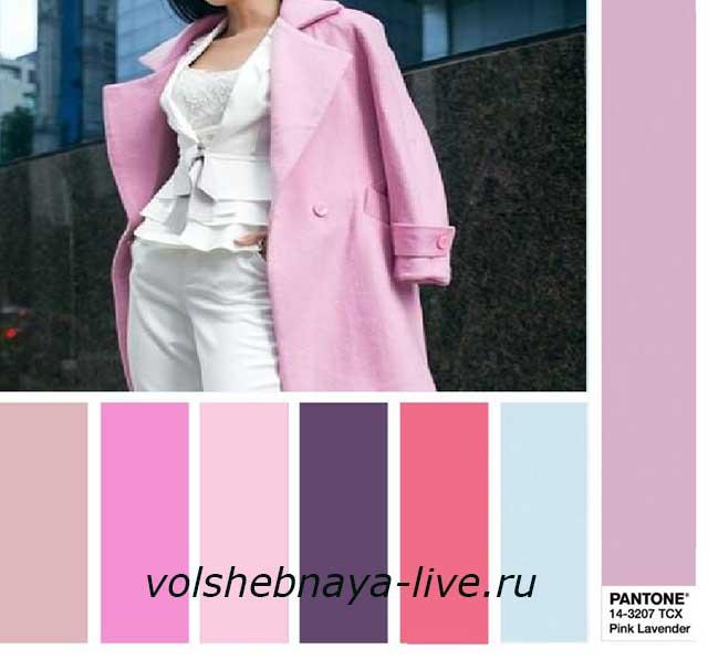 Pink Lavender 2018