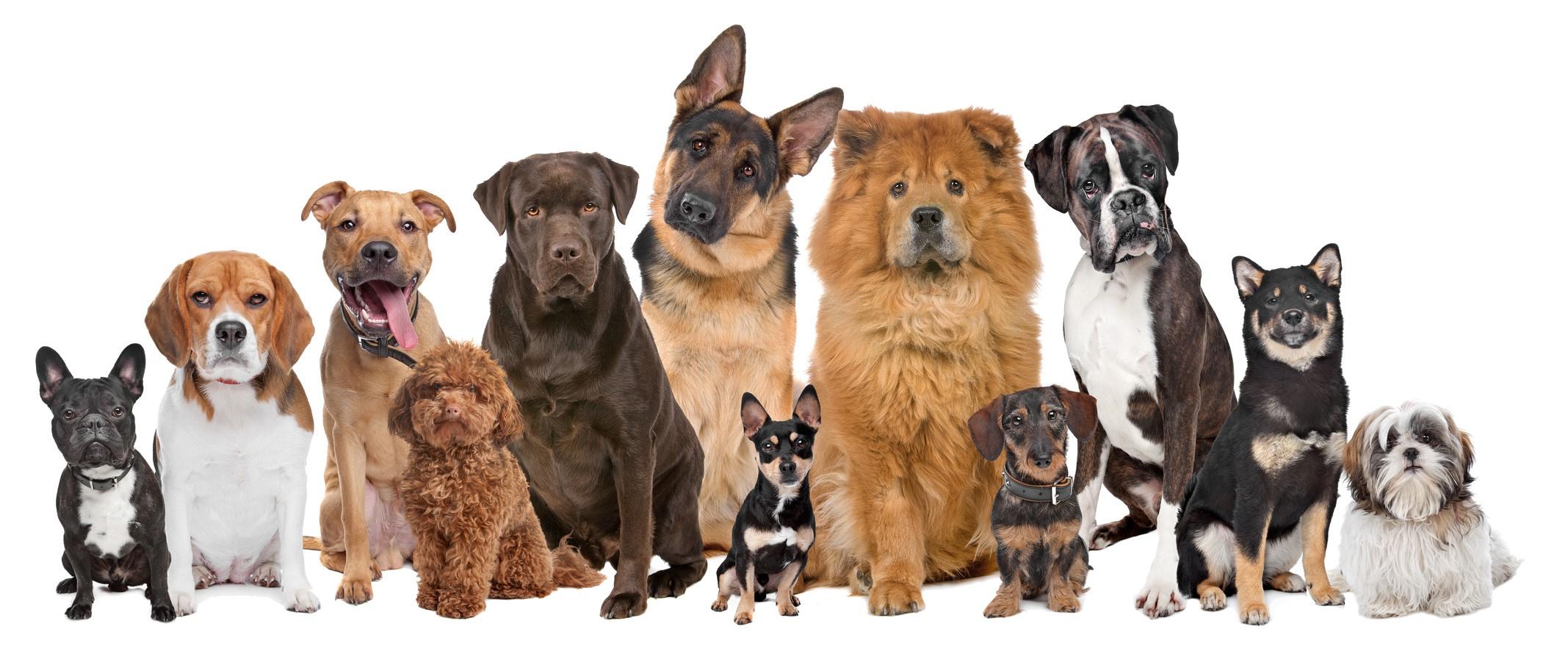 Выбираем себе собаку